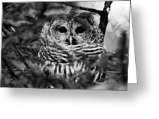 Barred Owl In Black And White Greeting Card