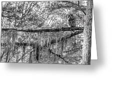 Barred Owl In Monochrome Greeting Card