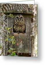Barred Owl In Nest Box Greeting Card
