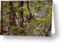 Barred Owl In The Forest Greeting Card