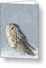 Barred Owl In The Snowstorm Greeting Card