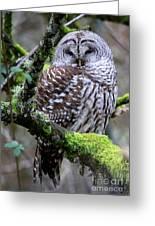 Barred Owl In Tree Greeting Card