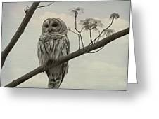 Barred Owl On A Tree Greeting Card
