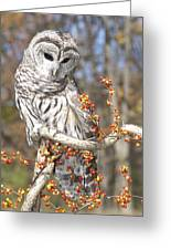 Barred Owl Portrait Greeting Card by Cindy Lindow
