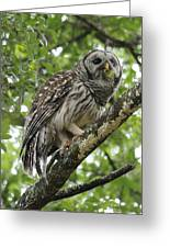 Barred Owl With A Snack Greeting Card