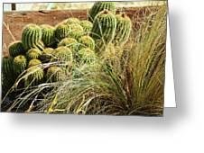 Barrel Cacti Greeting Card