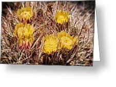 Barrel Cactus Flowers 2 Greeting Card