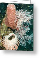 Barrell Sponges And Sea Fans Greeting Card