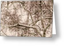 Barren Tree Greeting Card