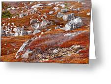 Barrens Greeting Card