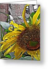 Barrio Sunflower 3 Greeting Card