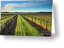 Barrossa Vineyard Sunrise Greeting Card