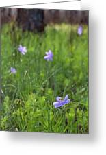 Bartram's Ixia And Bee #3 Greeting Card