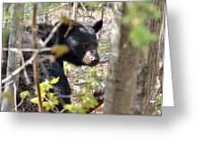 Bashful Black Bear Greeting Card