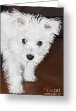 Bashful Puppy Greeting Card