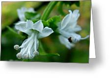 Basil Bloom Greeting Card