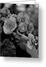 Basket Of Begonias Greeting Card