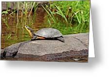 Basking Blanding's Turtle Greeting Card