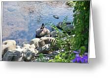 Basking On A Rock Greeting Card