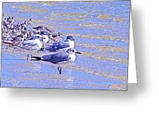 Basking On The Seashore Greeting Card
