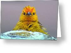 Bath Time Finch Greeting Card