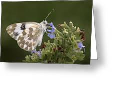 Bath White Greeting Card