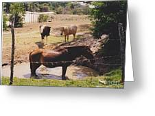 Bathing Horse Greeting Card