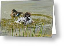 Bathing Greeting Card