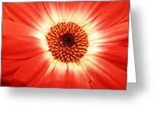 Batik Of A Gerbera Greeting Card