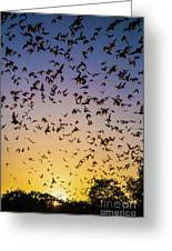Bats At Bracken Cave Greeting Card