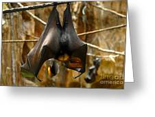 Bats Greeting Card