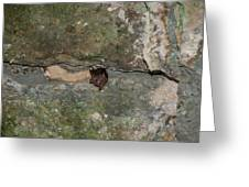 Bats Inside The Pyramid At Grupo Nohoch Mul At The Coba Ruins  Greeting Card