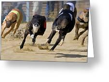 Battle Of The Racing Greyhounds At The Track Greeting Card