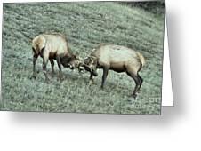 Battling Elk Greeting Card