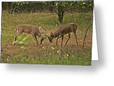 Battling Whitetails 0102 Greeting Card by Michael Peychich