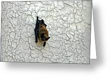 Batty Grin Greeting Card