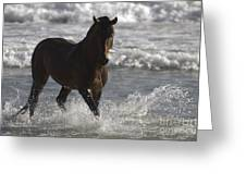 Bay Andalusian Stallion In The Surf Greeting Card