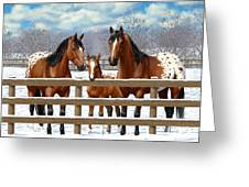 Bay Appaloosa Horses In Snow Greeting Card by Crista Forest