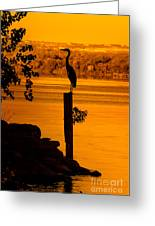 Bay At Sunrise - Heron Greeting Card