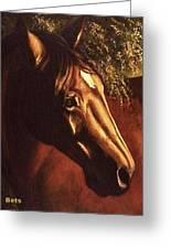 Bay Horse Art Horse Portrait Circe At Sunset Greeting Card