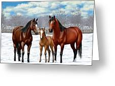 Bay Horses In Winter Pasture Greeting Card