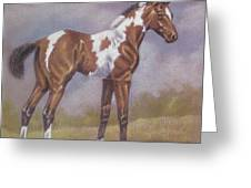 Bay Paint Foal Greeting Card