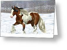 Bay Pinto Gypsy Vanner In Snow Greeting Card