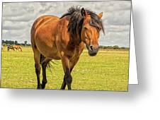 Bay Pony Greeting Card