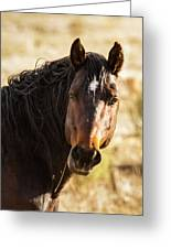 Bay Stallion Of Piceance Basin Greeting Card