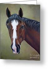 Bay Thoroughbred Horse Portrait Ottb Greeting Card