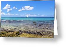 Bayahibe Coral Reef Greeting Card