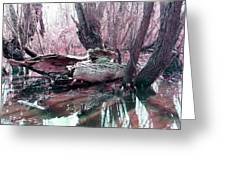 Cypress At Rest Greeting Card