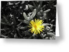 Be Different Greeting Card by Lynn Geoffroy