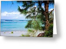 Beach Among The Trees Greeting Card